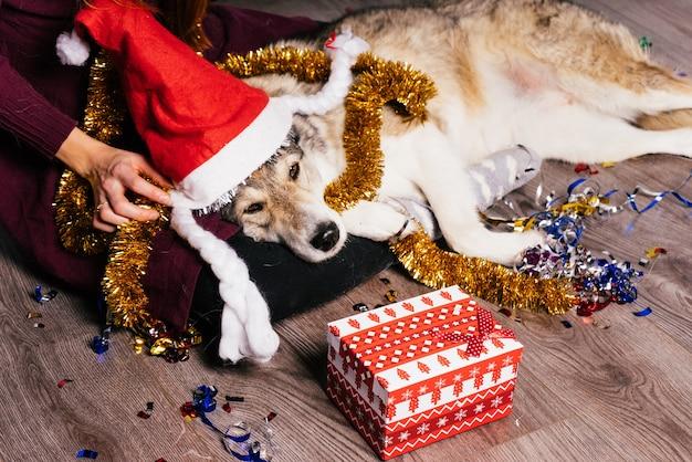 Собака в новогодней шапке лежит на руках у женщины