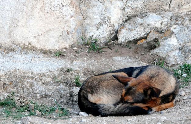 犬は地面に横たわっています