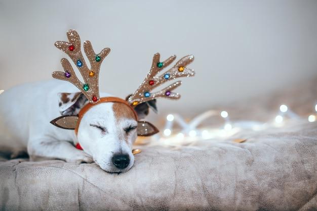 パーティーの後に疲れたクリスマスイルミネーションに照らして、犬はベッドで寝ています