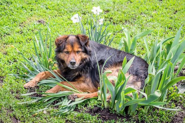 犬は花の間の庭に横たわっています