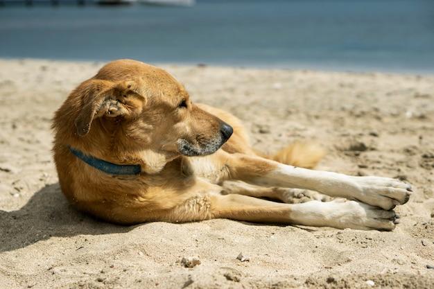 犬は海沿いの砂の上にあります。