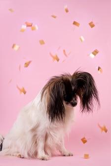 Собака смотрит конфетти