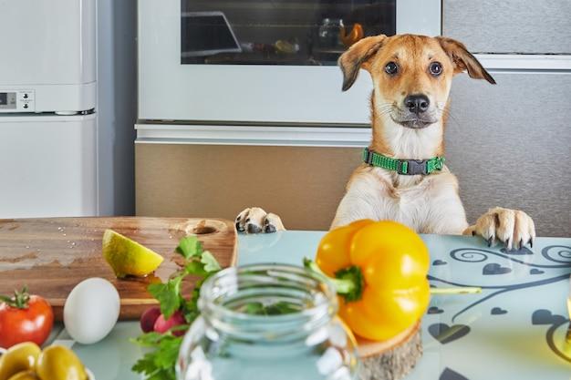 犬は、仮想オンラインマスタークラス用に準備された食べ物、自宅のキッチンで準備された健康的な食べ物を持ってテーブルを興味深く見ています。