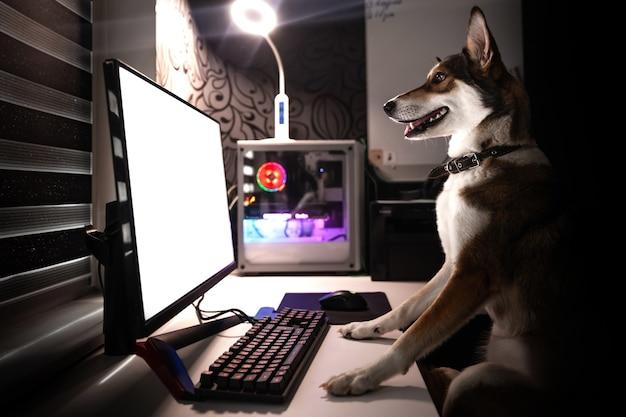 犬はテーブルに座ってコンピューターの画面を見ます。子犬は自宅のコンピューターで動作します