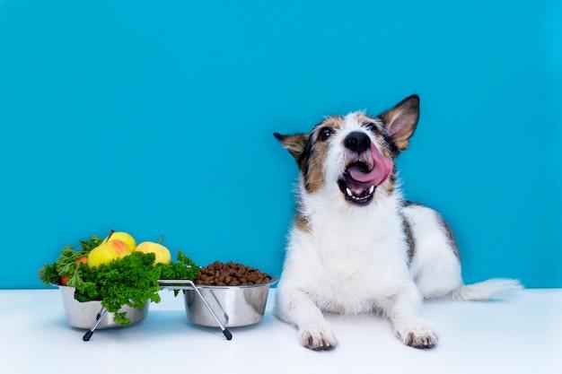 개는 음식 그릇 근처에 앉아 혀, 마른 음식, 신선한 야채와 과일을 핥습니다. 애완 동물 건강한 라이프 스타일과 영양 개념