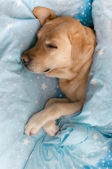 Собака спит под одеялом на кровати.