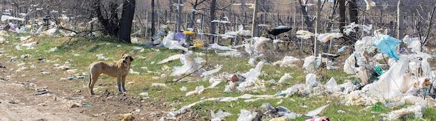 Собака стоит на свалке среди полиэтиленовых пакетов концепция экологической катастрофы