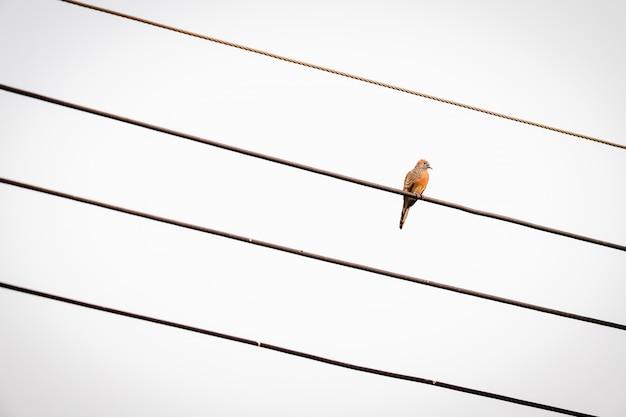 鳩は斜め方向に配置された4本の電線の上に腰掛けています。曇り空を背景に寂しくて寂しい