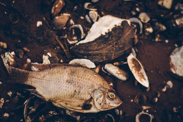말린 생선은 땅에서 죽었습니다. 그리고 조개껍질과 나뭇가지 조각도 있습니다.