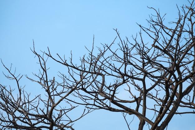 푸른 하늘 배경으로 마른 나뭇 가지