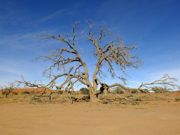 砂丘、ナミブ砂漠、ソーサスフライ、ナミビアの乾燥木