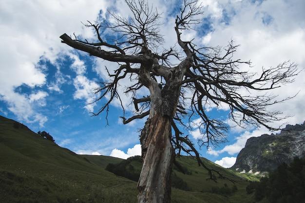 Сухое дерево в горах, в которое ударила молния