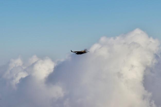 イエメンの山の空のワシ