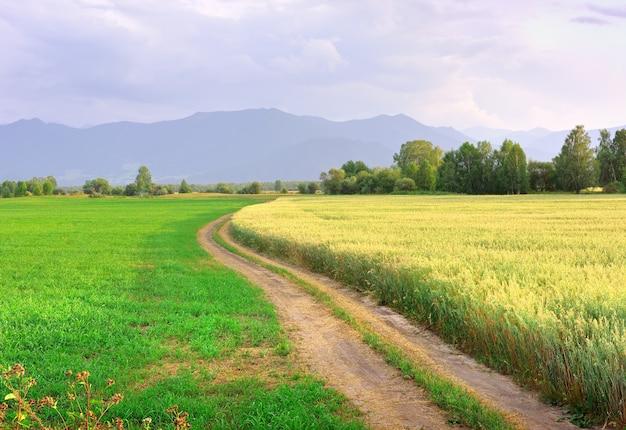 Край зернового поля под вечерним голубым небом. сибирь, россия