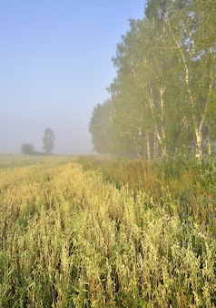 Край поля в тумане