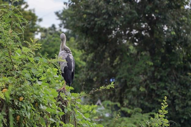 白鷺の鳥が立ち上がるのは自然の庭で休む