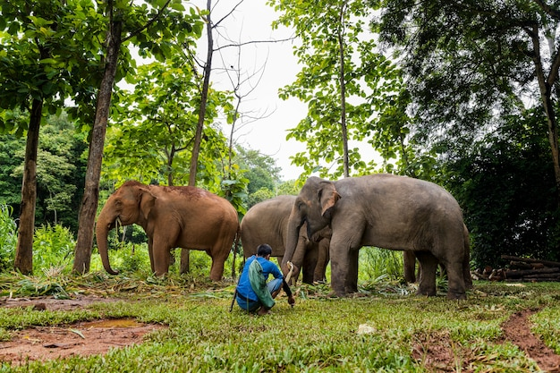 Слоны в лесу и погонях в природном парке, таиланд