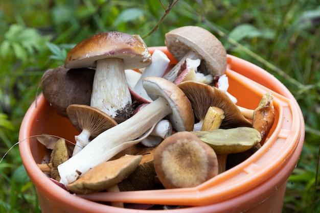 여름이 끝나거나 가을이 시작됩니다. 다양한 산림 버섯. 맛있고 향기로운 버섯, 포르 치니 버섯, 숲의 냄새, 자유와 영감.