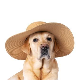 Лицо собаки в соломенной шляпе на белом изолированном фоне. отпуск, путешествия, летняя концепция.