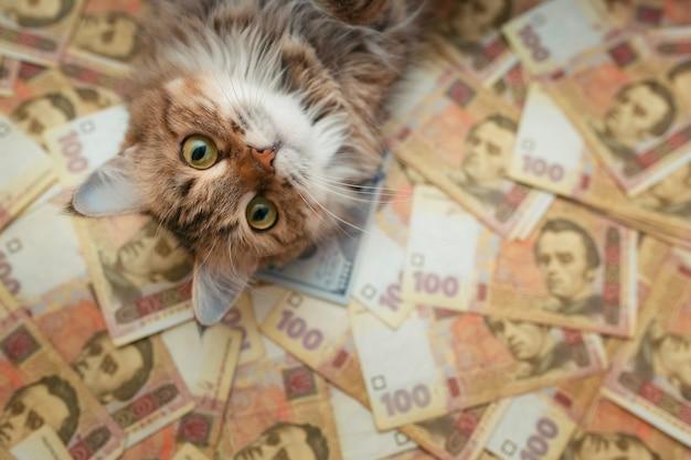 ウクライナの紙幣に横たわっている猫の顔