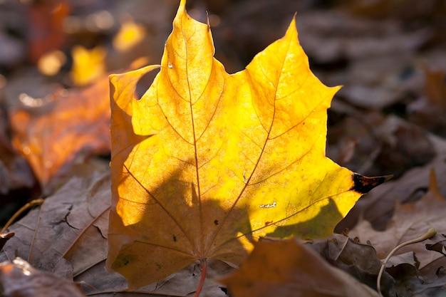 Упавший лист на землю