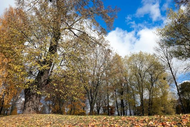 Упавший на землю. упавшая с деревьев и лежащая на земле трава пожелтела листва, осенний сезон