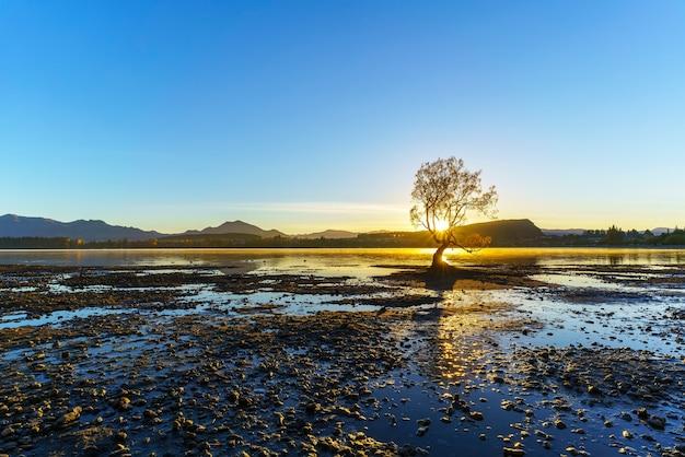 와나카 호수의 유명한 고독한 나무는 뉴질랜드 남섬 와나카의 황혼의 세계 문화 유산 인 마운트 어스 파이어 링 국립 공원 기슭에 있습니다.