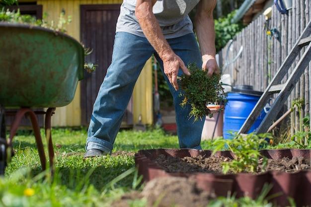 農夫は庭で働いています。植物の世話をします。土壌を肥やす。