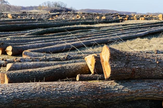 伐採された木は地面に横たわっています。大きな丸太-枝から幹を剥がしました。森林の清掃
