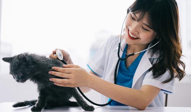 女性獣医は猫の定期健康診断を行っています