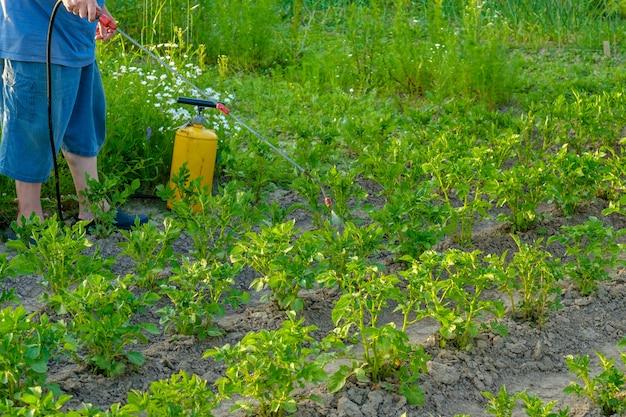 Борьба с колорадским жуком и другими вредными насекомыми летний солнечный вечер