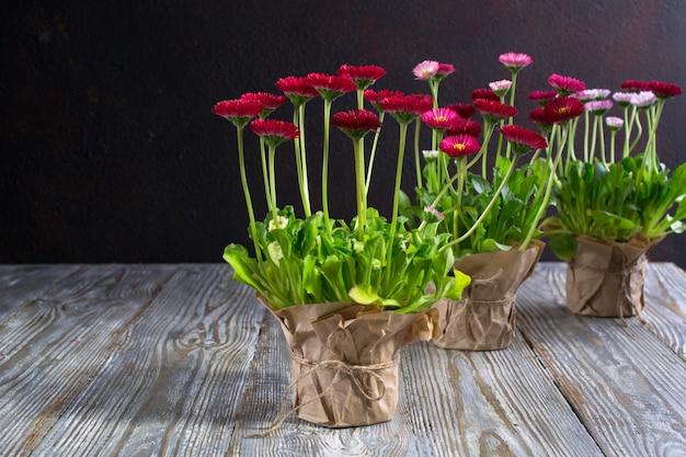 植える準備ができている最初の春の色とりどりの花。ワークスペース、春の花を植える。園芸工具、鉢植え、ダークテーブルの植物