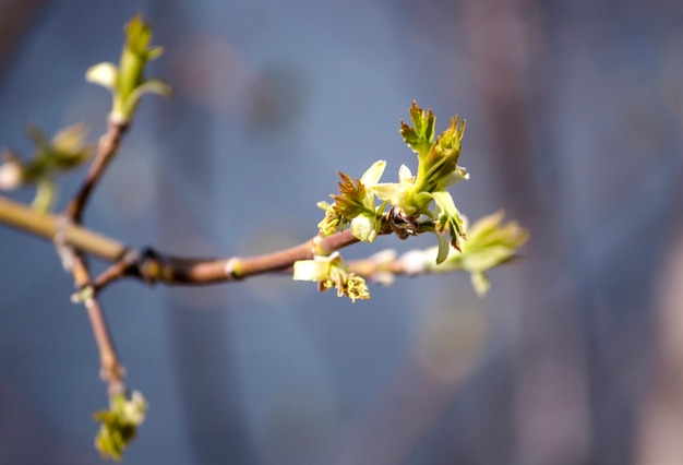 첫 번째 봄 부드러운 잎, 새싹 및 가지에 공간 복사본이 있습니다.