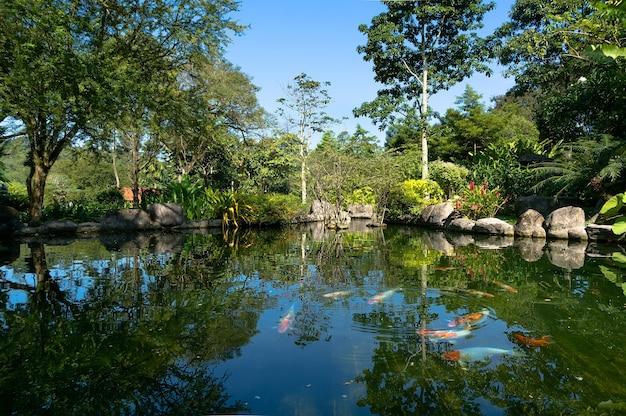 魚はマレーシアのクアラルンプールの中心部にある美しい緑豊かな公園の池で泳ぎます