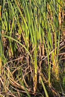 Затопленная территория представляет собой болото, на котором растет большое количество травы и растений. Premium Фотографии