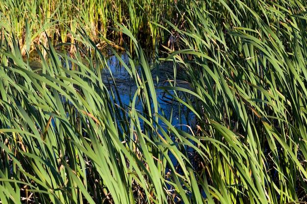 Затопленная территория представляет собой болото, на котором растет большое количество травы и растений.