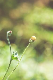 花は背景の柔らかいスタイルで色調整