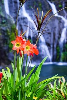 Цветы на фоне водопада. цветочный гиппеаструм на фоне водопада баньюмала с каскадами среди зеленых тропических деревьев и растений на севере острова бали