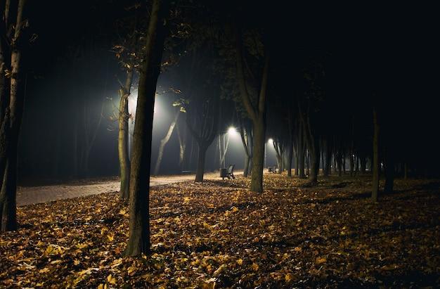 秋の公園の霧の夜