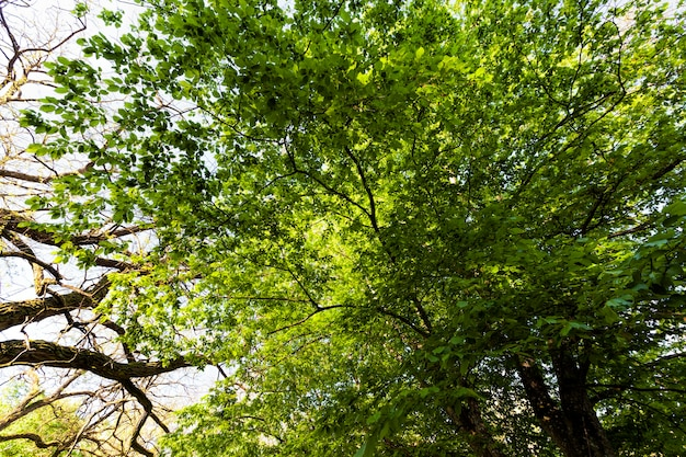 Листва деревьев освещена ярким солнечным светом, деревья с зеленой листвой летом