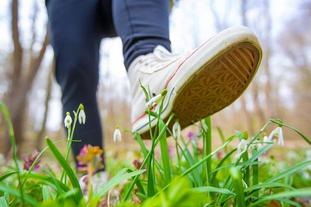 여성 신발의 발은 국립 공원, 식물원, 자연 피해, 환경 개념의 희귀 한 꽃을 밟습니다.