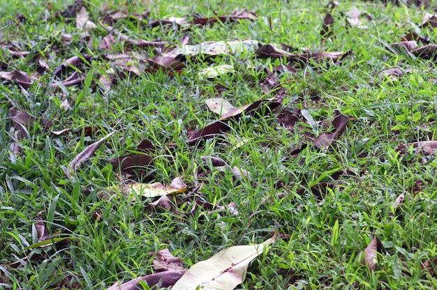 林床は、葉、枝、樹皮、茎など、土壌表面上で分解のさまざまな段階に存在する小屋の栄養部分で構成されています。
