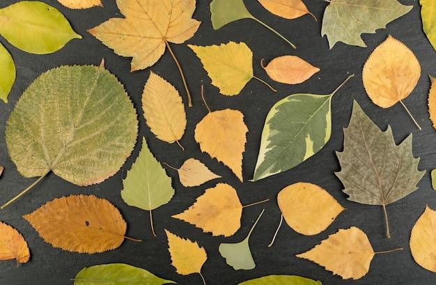 자작 나무, 참나무, 단풍 나무, 밤나무, 플라타너스, 린든 및 기타 잎이 섞인 위장 색상의 숲 바닥. 평평한 말린 잎 평면도