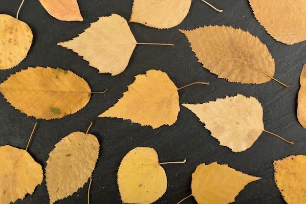 Лесная подстилка в камуфляжных тонах с березовым, дубовым, кленовым, каштановым, платановым, липовым и другим сочетанием листьев. плоские сушеные листья вид сверху