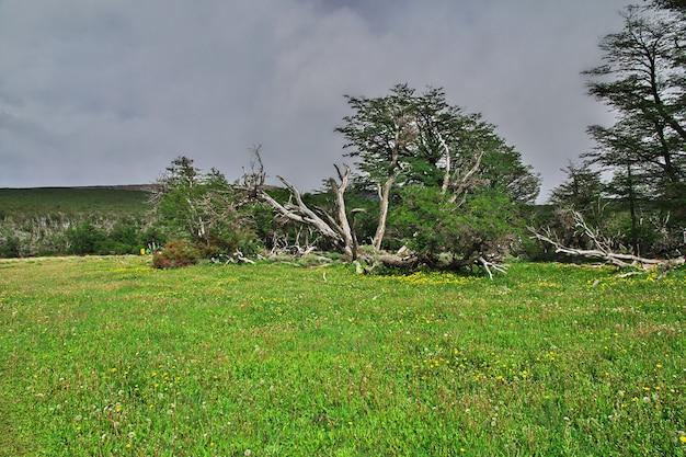 Лес в национальном парке лос-глейшер рядом с фитц-роем, эль-чалтен, патагония, аргентина