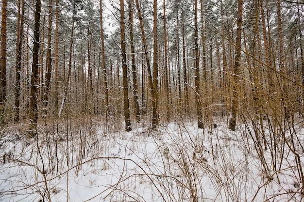 겨울 숲은 마지막 눈보라와 눈이 내린 후 눈으로 덮여 아름다운 풍경