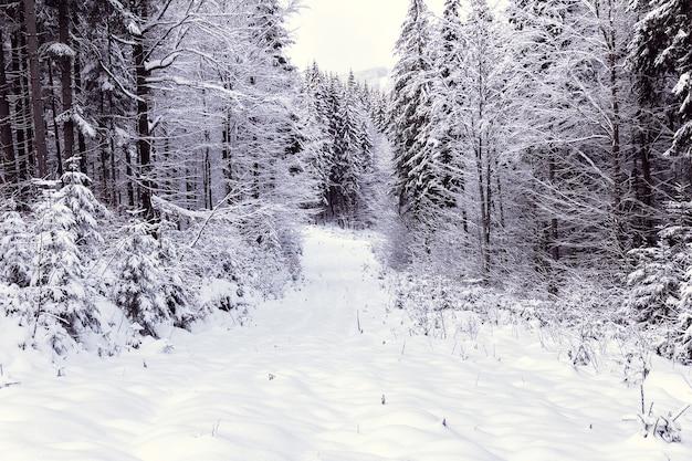 Зимой лес покрыт белым снегом
