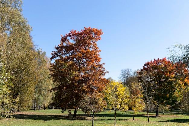 明るい暖かい日に太陽に照らされた、さまざまな種類の落葉樹がある秋の日光の下の森