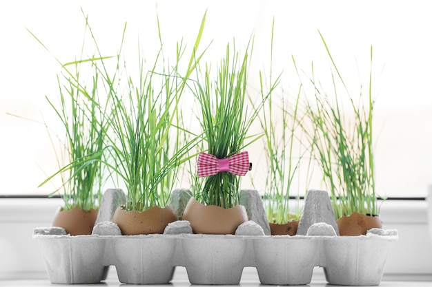 卵の殻で育つ新緑の草。イースターの日のための春の創造性のアイデア