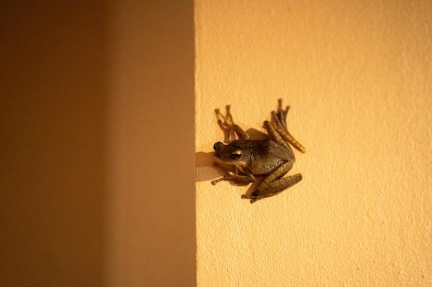 Лягушка сидит на стене. присоска лягушка